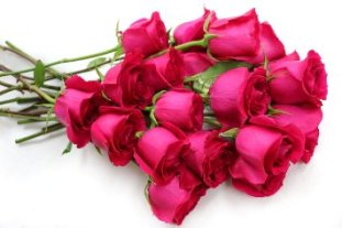 fresh-flowers-two-dozen-pink-roses_9519739.jpeg