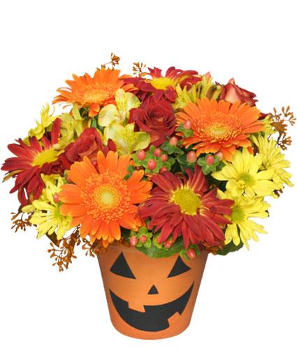 bloomin-jack-o-lantern-halloween-flowers-AO00410.425.jpg